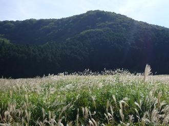 仙石原.JPG
